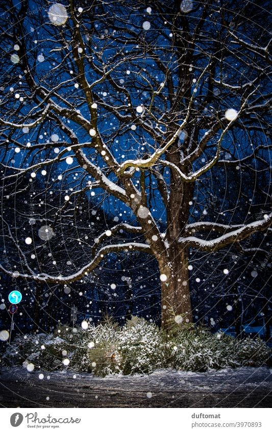 Night shot of tree in snowfall Snow snowflakes Tree snowy christmas tree Light Winter Cold Snowfall Nature Deserted White Frost Weather Landscape Bad weather
