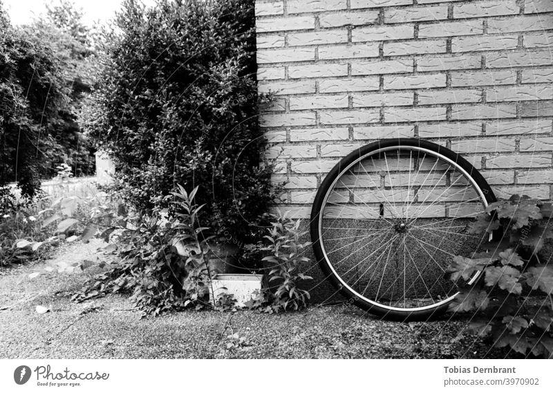 Black and white photo of bike wheel leaning against a brick wall Bicycle Black & white photo Brick wall rim Wheel Minimalistic Bushes bricks