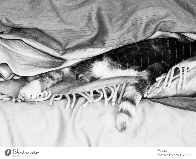 Some blankets and a little hangover Animal portrait Pet Pelt mackerelled pets Lie Cat Bed Wool blanket Tails Duvet