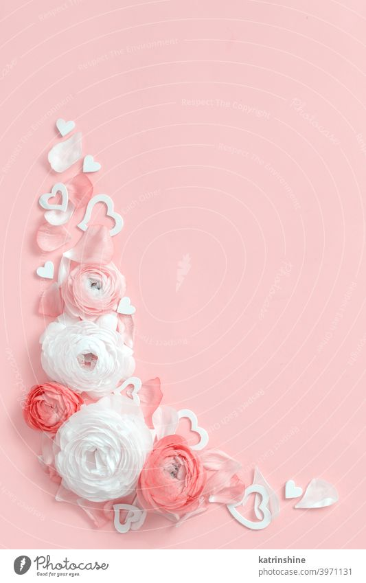 Angle frame made of ranunculus flowers and hearts on a light pink background valentine red roses gift top view pastel monochrome flat lay composition spring