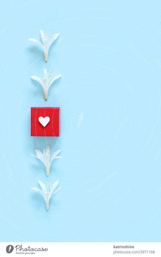 White flowers and red gift box on a light blue background heart white top view spring romantic pastel flat lay above valentine day floral holiday march mother