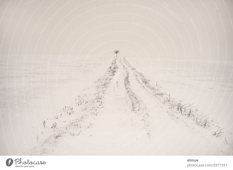 The way is the goal!  *1000* / Snowy dirt road with a small tree on the horizon Winter off the beaten track Tree White Minimalistic Horizon the way is the goal