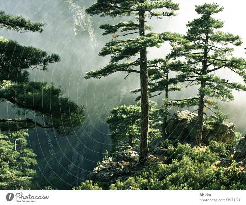 Nature Vacation & Travel Tree Landscape Calm Far-off places Environment Mountain Life Movement Freedom Moody Power Fog Contentment Growth