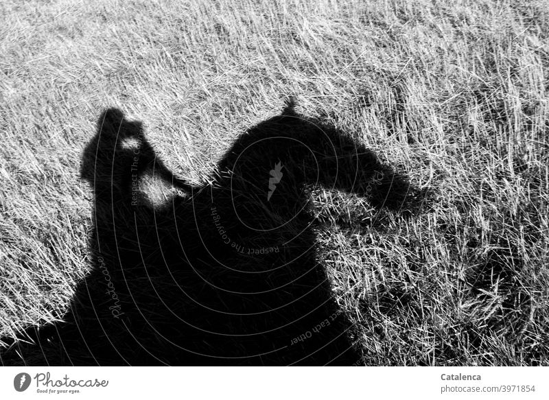 Riding Shadow Fur Rider Horse Nature Grass Animal Farm animal person Meadow Grassland Plant Steppe bridle Day daylight