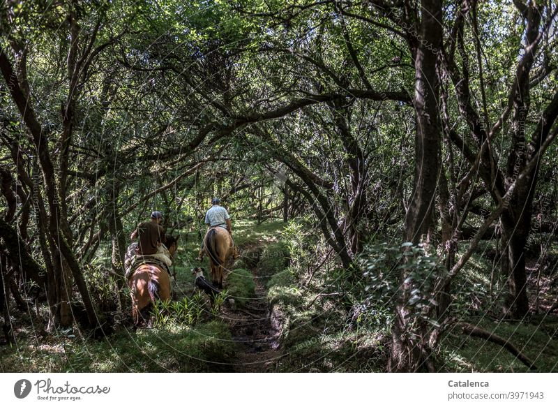 Two riders and dog make their way through the dense, shady jungle Nature flora fauna Plant trees undergrowth Rider animals Farm animals horses Dog off path