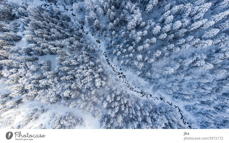 Bird's eye view of a wintry mountain stream II Bird's-eye view Diagonal DJI drone Brook Mountain stream Body of water Winter winter Cold freezing cold Tree tops