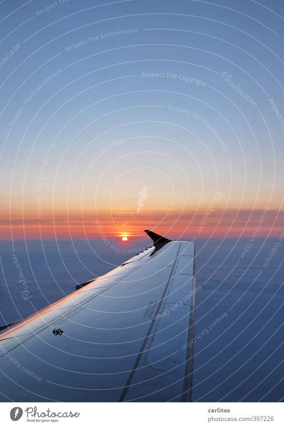 Sky Vacation & Travel Blue Sun Far-off places Environment Air Flying Glittering Orange Aviation Beautiful weather Elements Airplane Vantage point Infinity