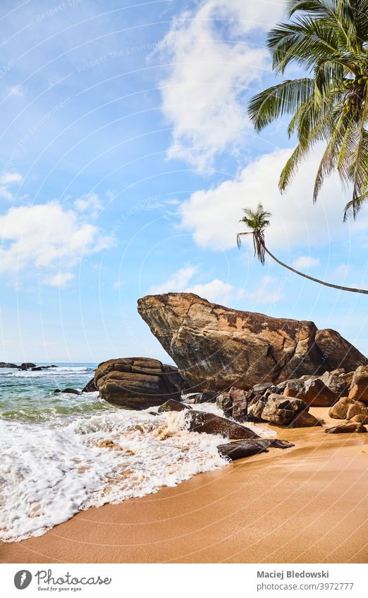Tropical beach with rocks and coconut palm trees on a sunny summer day. nature tropical paradise peaceful water beautiful sea island exotic landscape sand