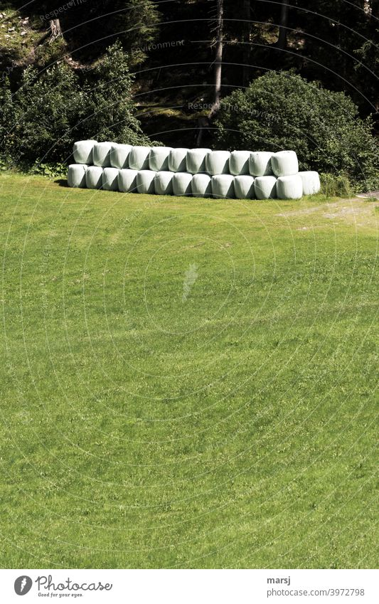 Stockpiling, neatly stacked silo bales on a green meadow at the edge of the forest Silo Stability Silage film Trash Recycling Plastic plastic Packing film