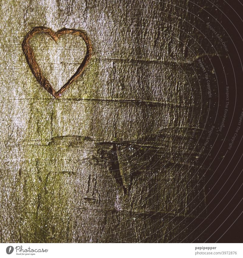 Heart carved into a tree Heart-shaped Tree bark Love Sign Colour photo Infatuation Romance Emotions Deserted Close-up Valentine's Day Exterior shot