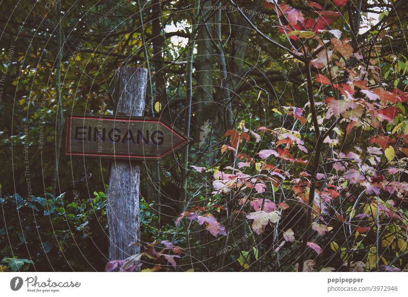 Sign Entrance in a forest Signs and labeling sign Sign forest Forest Edge of the forest woodland Clearing Forest walk Forest atmosphere forest path Nature Tree