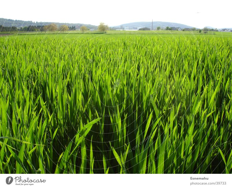 grass look Grass Meadow Green Far-off places Near Blade of grass Black Summer Spring Structures and shapes Field Lawn Sky Nature Wind Blow Blue Lanes & trails