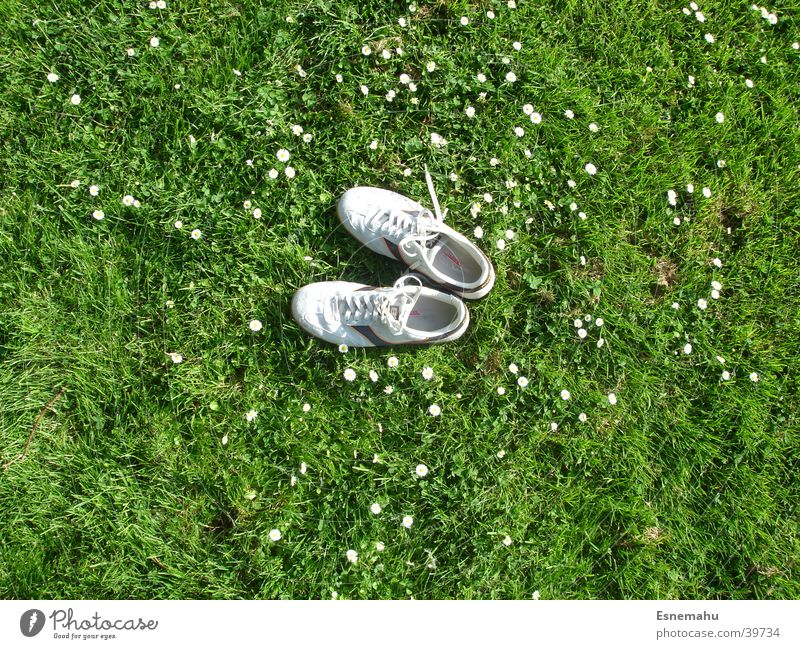 Shoes without humans Footwear Sneakers Grass Flower Daisy Meadow Field Bird Bird's-eye view Lack Loneliness Green Gray White Yellow String Clothing