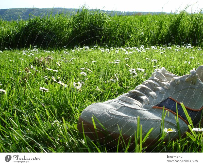 Quiet landscape Footwear Sneakers Grass Flower Daisy Meadow Field Bird Bird's-eye view Lack Loneliness Green Gray White Yellow String Clothing Tree Bushes