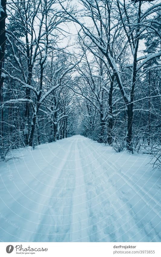 Winter at the Wannsee: Way to the Wannseebad Winter mood Winter vacation Esthetic Snow Exceptional Copy Space middle Sunlight Copy Space bottom Copy Space top