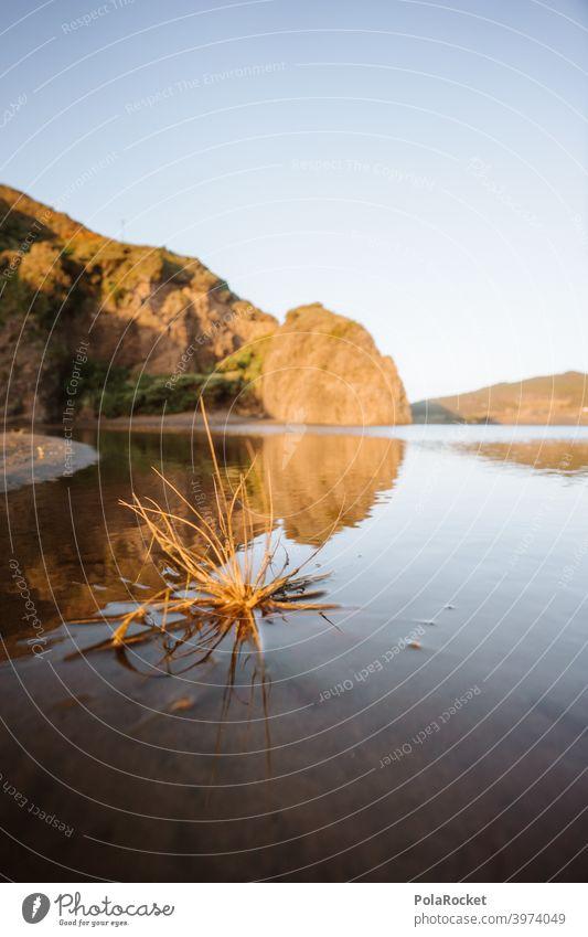 #AS# Beach urchin Water Ocean Hedgehog Thorn Nature Exterior shot Thorny coast Rock Lie Still Life Plant undergrowth