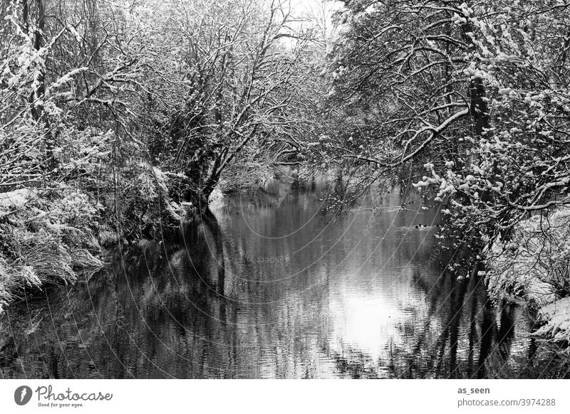 winter wonderland Winter River Black & white photo Black and white photography Snow Cold Tree Landscape Exterior shot Nature Day White Deserted Environment