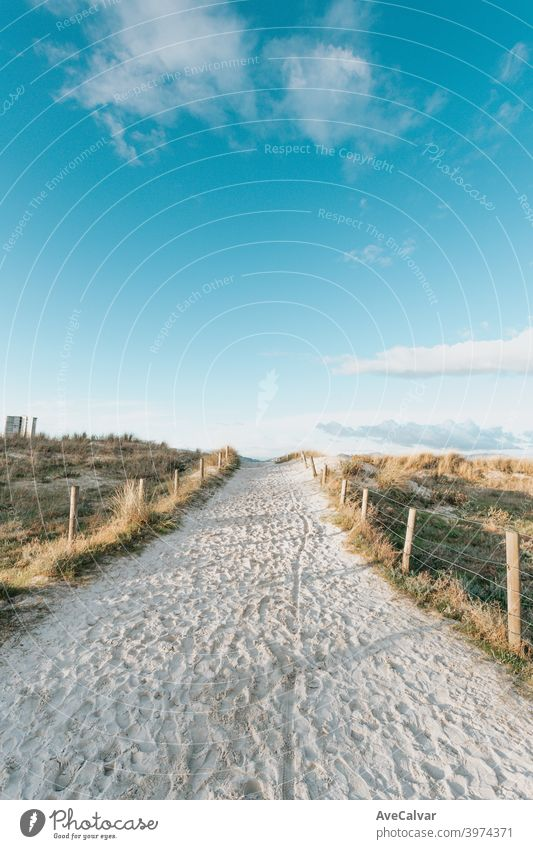 A wide angle shot of the path of sand to the beach surrounded by plants during a clear day in spring beginnings copy-space ideas infinity holidays inspiration