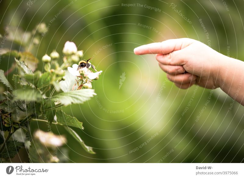 Child explores you nature Nature insects Bumble bee Forefinger plants Spring Hand inquisitorial Joy Infancy Summer Garden