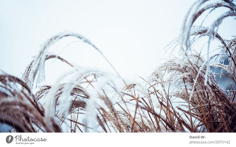 Frost and cold - plants in winter Winter chill Hoar frost Nature Ice icily Weather Winter's day Frozen