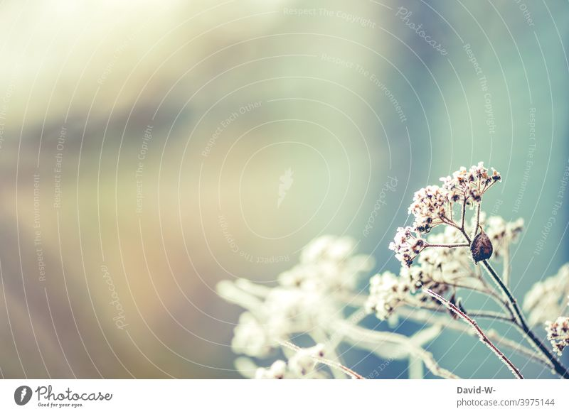 frosty - plants covered with hoarfrost in winter Cold Frost Hoar frost Winter chill Art Ice crystal Frozen Freeze White