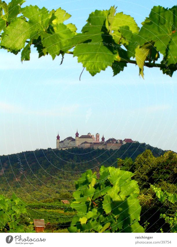 foundation göttweig Bunch of grapes Wine growing Vine Hill Federal State of Lower Austria Historic divine branch Monastery Benedictine Mountain Landscape