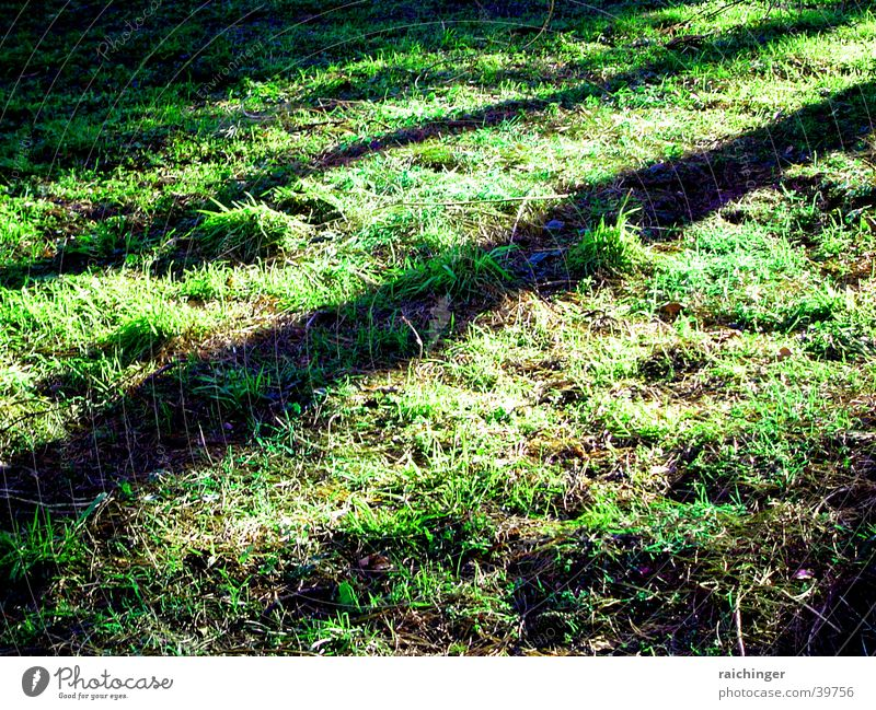 Green Life Grass Spring Earth Floor covering