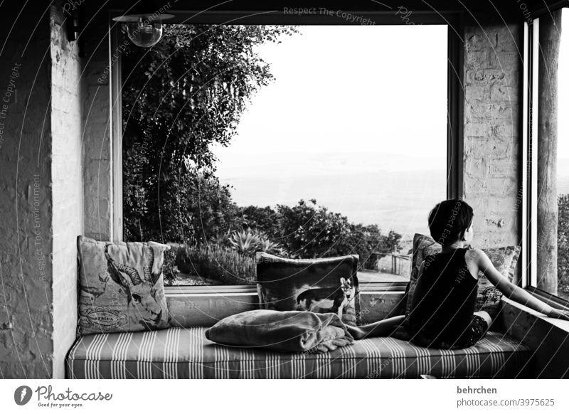 favourite place portrait Sunlight Contrast Light Living or residing Interior shot Evening Cozy Cushion Tree Window Veranda Sofa Wanderlust South Africa