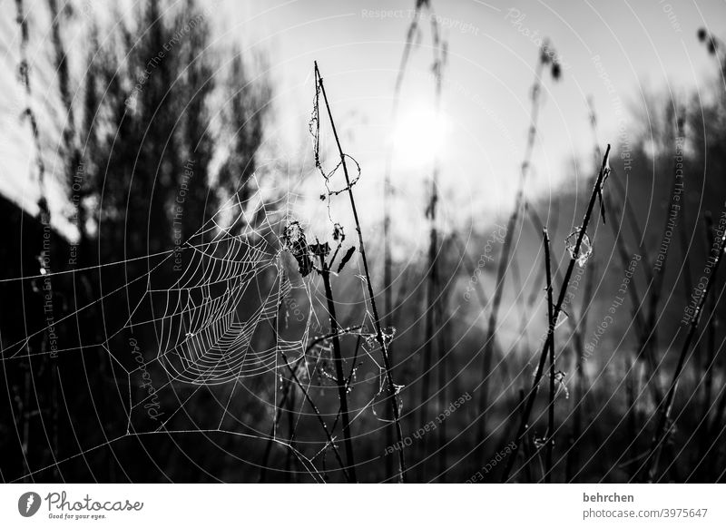 Network Sky Leaf Bushes Plant Tree Contrast Sun Landscape Environment Exterior shot Idyll tranquillity Spider's web Nature Sunlight Sunrise Meadow Garden