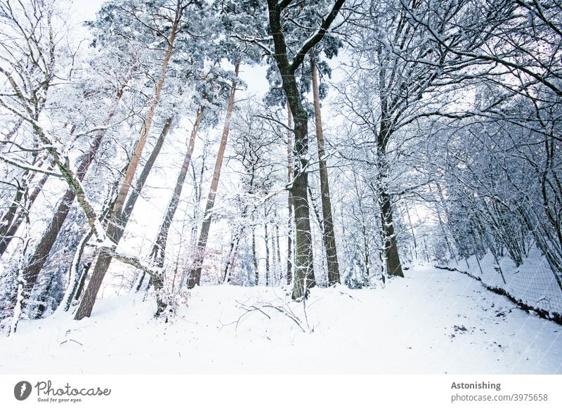 winter forest Winter forest Forest Snow trees Wide angle Weather Snowfall Coniferous trees off path Landscape Nature White Tree trunk tribes Tall Large Branch