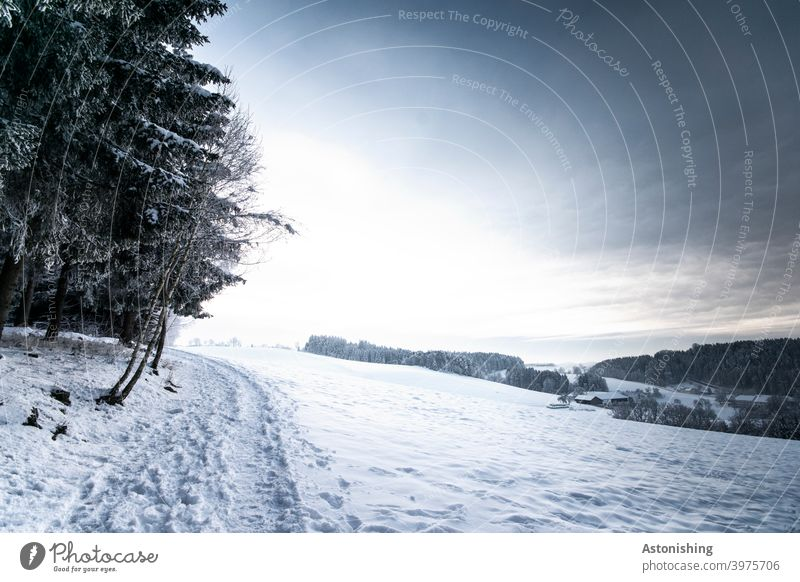 Winter Hills Landscape winter landscape hilly Forest Nature Sky Horizon Snow White off path Light Shadow Winter forest white blue Sun Weather Season trees