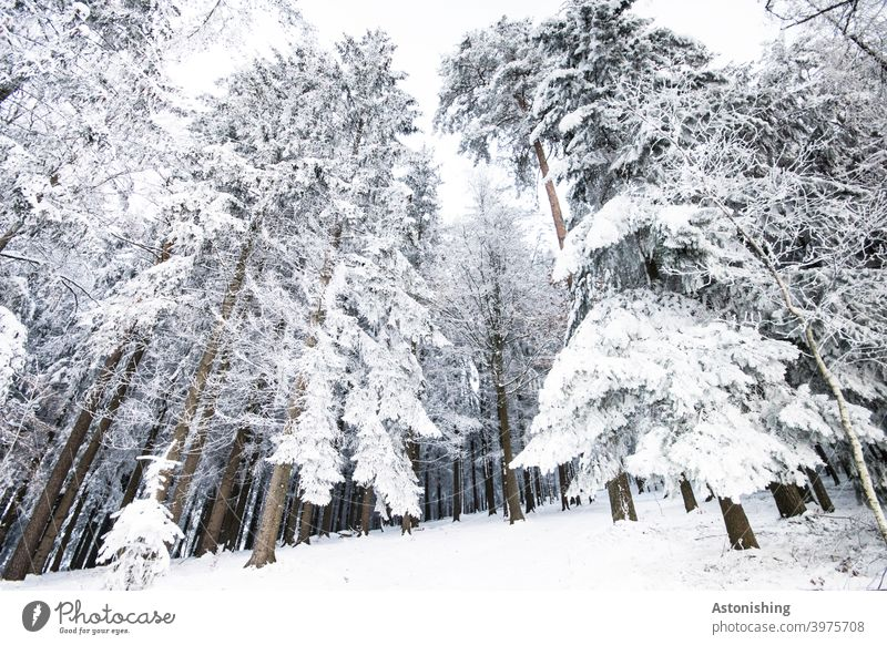 Snowed in forest snowed in Forest Winter Landscape White Sky Ground Winter forest Coniferous trees Weather tree trunks Tree winter landscape Cold Nature