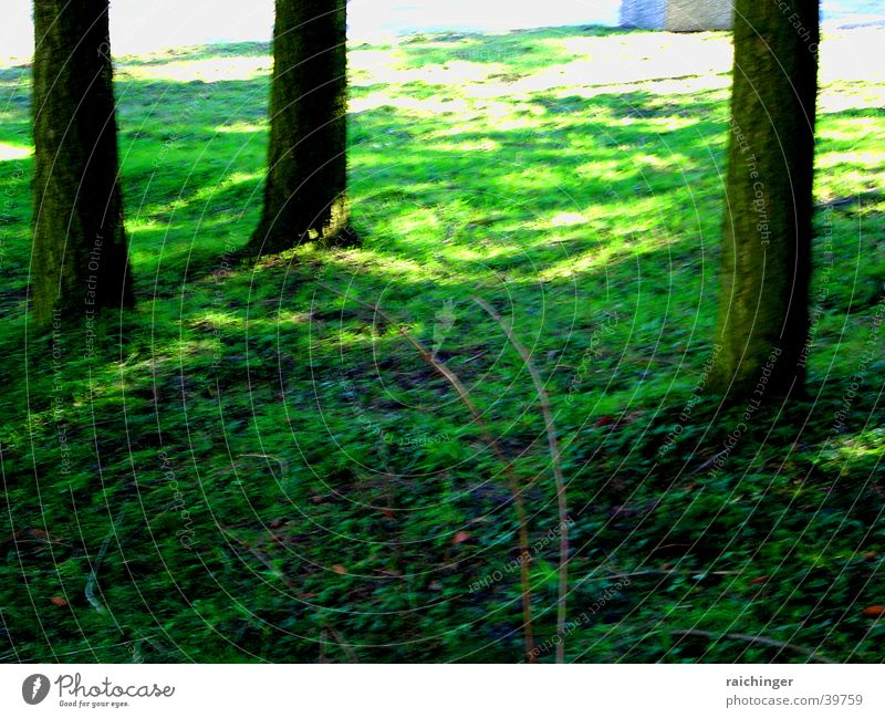 Tree Green Life Grass Earth Floor covering Tree trunk Juicy Rooted