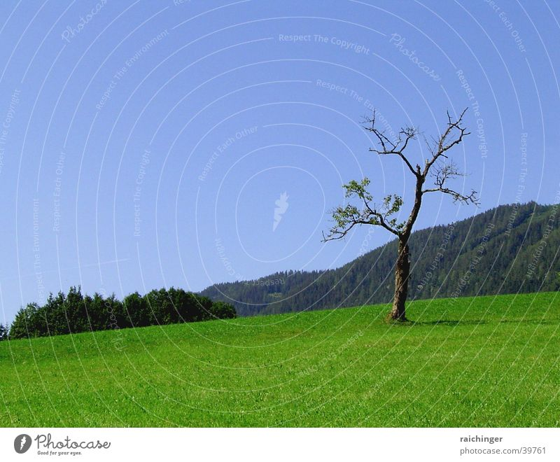 Nature Sky Tree Green Blue Loneliness Life Meadow Landscape Thin