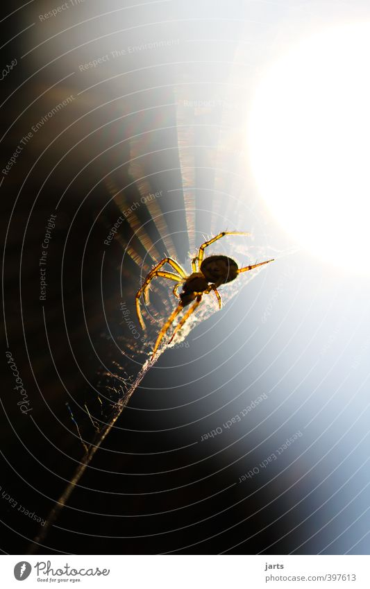 thekla Animal Wild animal Spider 1 Nature Observe Spider's web Colour photo Exterior shot Close-up Detail Copy Space top Copy Space bottom Evening Light Shadow