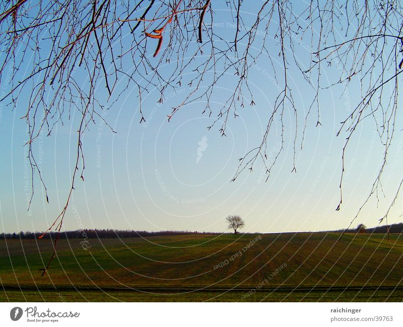 lonely tree Tree Loneliness Meadow Field Twig Sky Far-off places