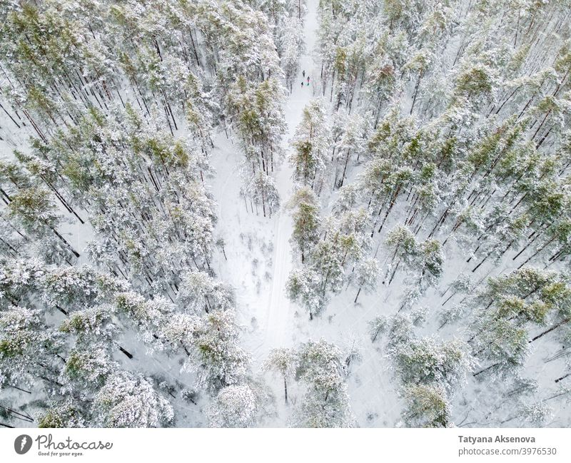 Winter road in snowy forest winter family walk hike hiking nature season tree aerial cold weather frost landscape view white wood outdoor ice background drone