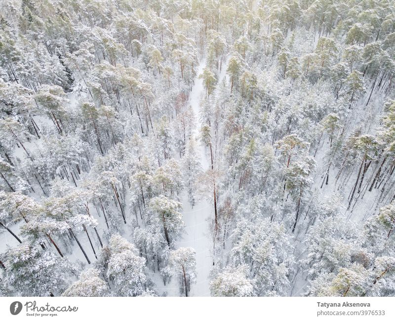 Winter road in snowy forest winter nature season tree aerial cold weather frost landscape view white wood outdoor ice background drone environment travel pine