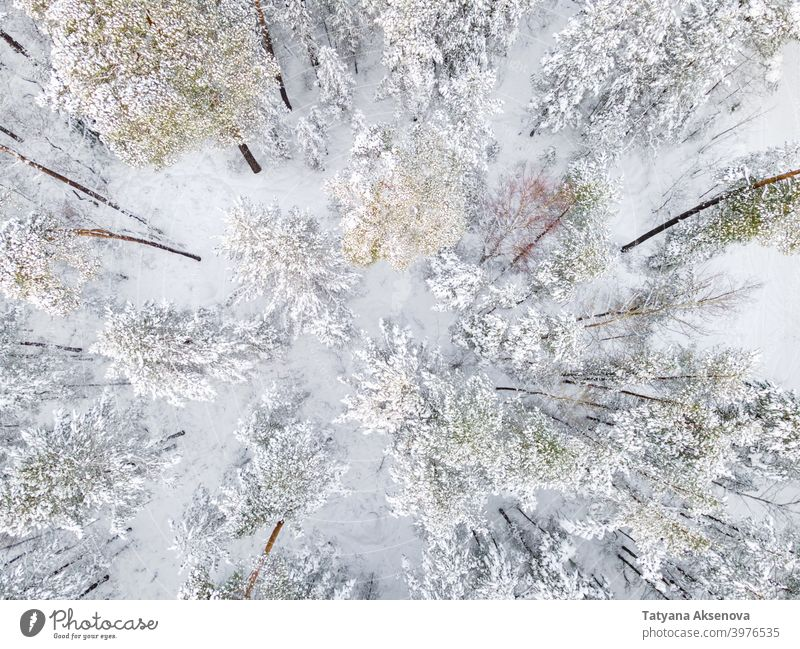 Trees covered by snow in winter forest nature season tree aerial cold weather frost landscape view white wood outdoor ice snowy background drone environment