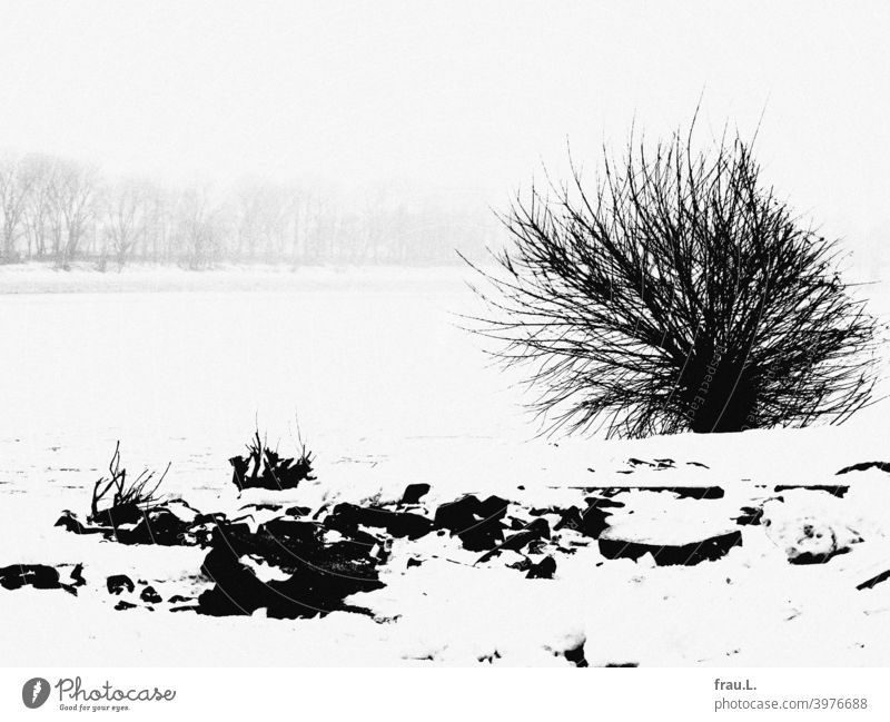 Once upon a time in Hamburg, it snowed... Winter Snow Cold Frost bush Elbe Tree bank stones