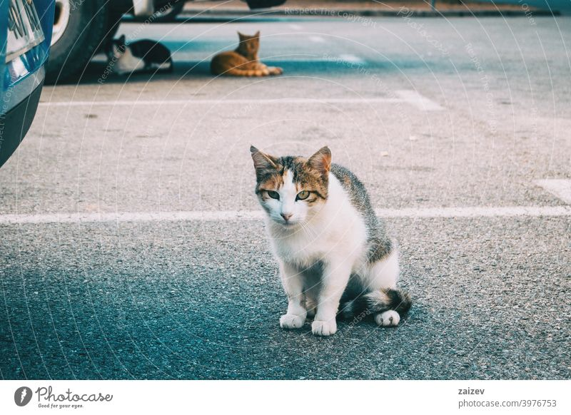 stray cat hiding in a corner of the city alley sad solitude staring vertebrate depression help hide ill mature poor scared straight unhappy pet feline eye look