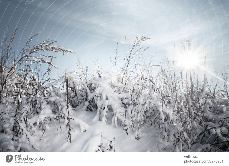 Suburban Winter winter Winter mood Snow grasses snowy Sunbeam Beautiful weather Winter's day Cold Landscape Nature