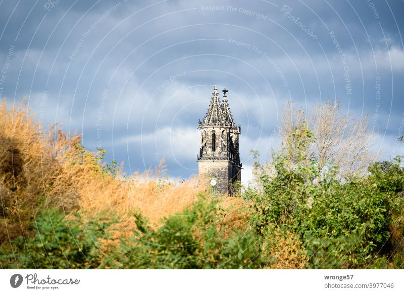 The two towers of the Magdeburg cathedral stretch out behind a hill overgrown with desert undergrowth into the cloudy sky. Dome Magdeburg Cathedral spires