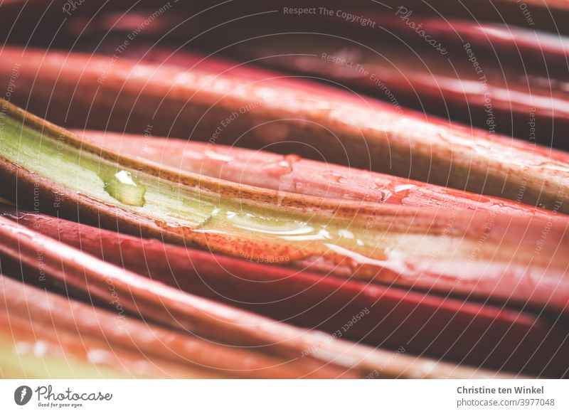 Red washed rhubarb stalks lie close together, close up with weak depth of field Rhubarb Rhubarb Rods Nutrition Healthy Eating Fresh Vegetarian diet Vitamin