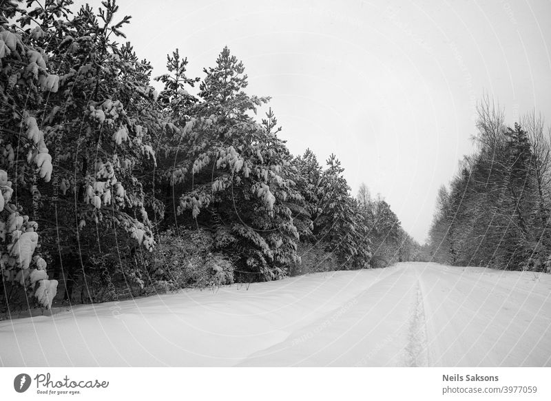 northern perspective / country road in deep winter / heavy snow on coniferous trees / black and white version of infinity Above abstract adventure aerial
