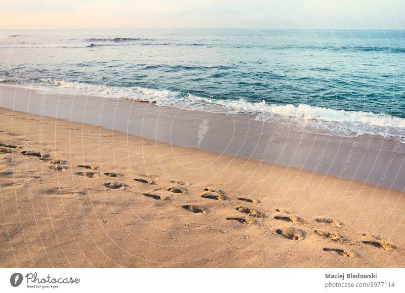 Footprints on a sandy tropical beach at sunset. footprint peaceful calm vacation sea water summer retro ocean sunny step coast outdoor relax wave shore track