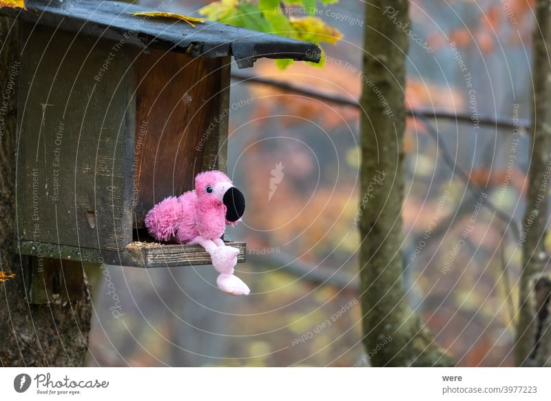 Stuffed animal flamingo sitting in bird feeder in forest Fake Flamingo alien animal wildlife copy space cuddly toy false misplacement nobody pink terry cloth