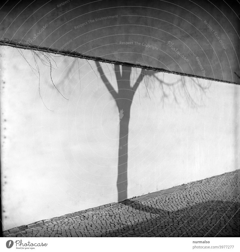 Zusammentreffen Analog kontrast baum wand schatten pflasterstein stadt quadratic rollfilm winter Kälte