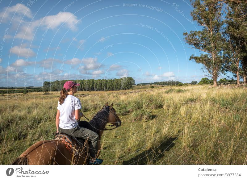 The young woman rides to the flock of sheep in the tall grass Nature Landscape flora fauna Young woman person Animal Horse Flock Plant eucalyptus Grassland