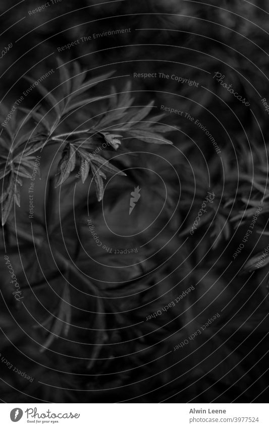 Black and White close-up of leaves black white black and white blackandwhite monochrome abstract leaf pattern light shadow beautiful art artistic plant botany